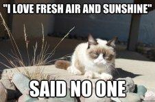 cat fresh air